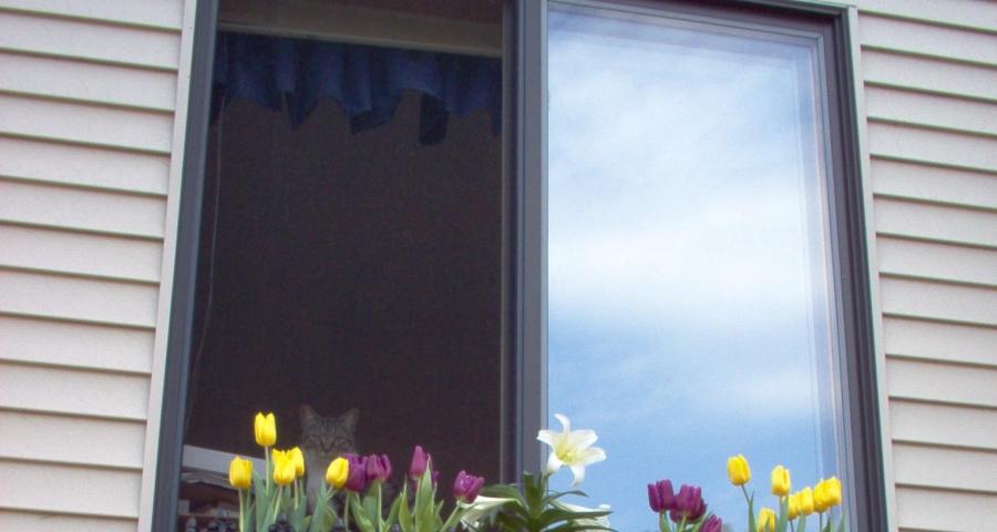 kwiaty i rolety w oknach