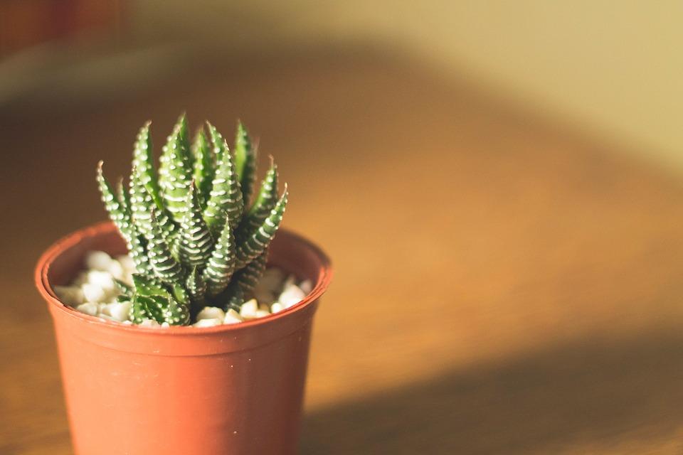 Jakie zalety posiada growbox hydroponiczny?