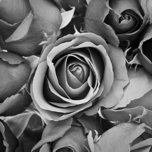 Kremacja zwłok – dlaczego warto się na nią zdecydować?